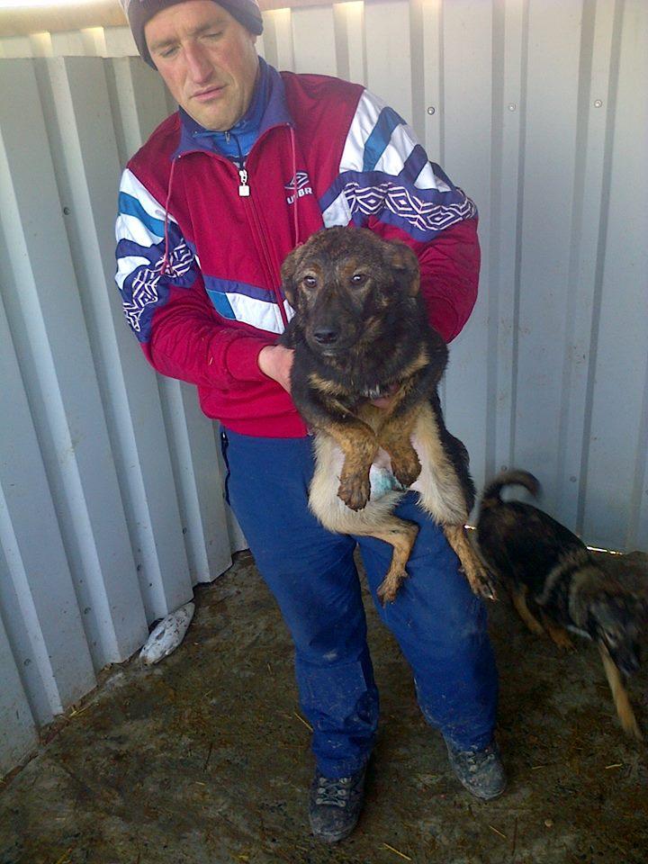 JUNGLE - chiot mâle croisé berger né env septembre 2014 - adopté par Laeticia (dpt88) - Page 2 11020210