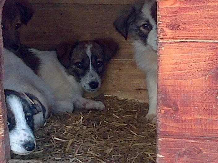 GREEN !! PLUS DE 4 ANS DE BOX !! femelle née en novembre 2014, croisée, taille petite à moyenne (Pascani) - REMEMBER ME LAND - Décédée  11026510