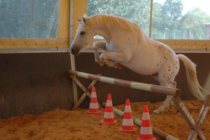 Propose de dessiner gratuitement vos chevaux !  - Page 3 61261_10