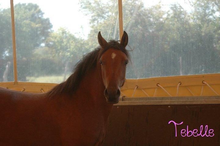 Propose de dessiner gratuitement vos chevaux !  - Page 3 63591_10