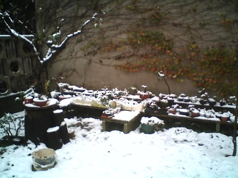 Dove coltiviamo i nostri bonsai - Pagina 2 Pict0010