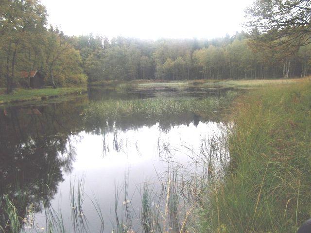 Sur le plateau des 1 000 étangs Etang_13