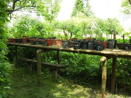 Quelques uns de mes arbres 201110
