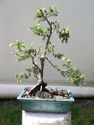 Quelques uns de mes arbres Dscf0110