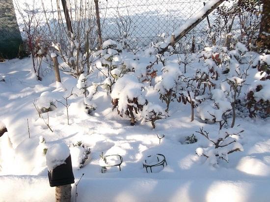 Bonsaï en hiver Dscf1213