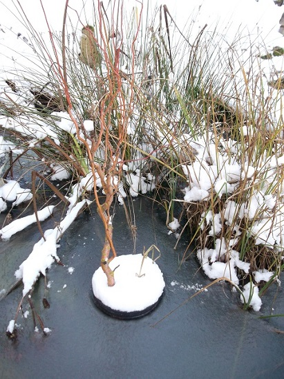 Bonsaï en hiver Dscf1214