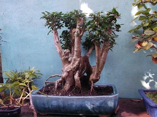 Quelques uns de mes arbres Dscf4810