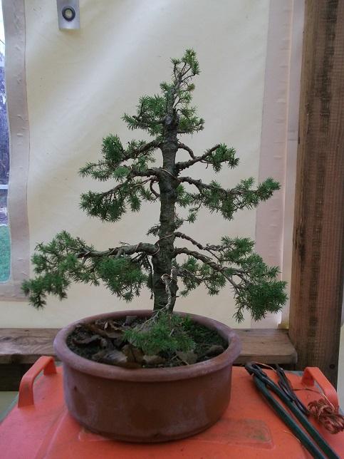 Quelques uns de mes arbres Dycemb10