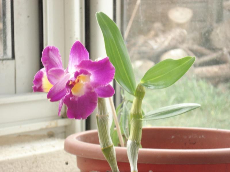 saison orchidophile 2015 022_co10