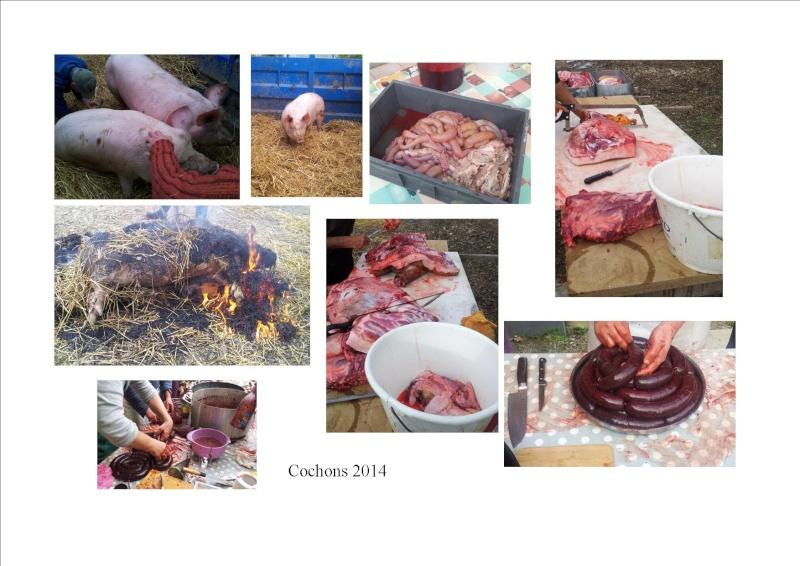 Unimog 421.141 de Manu Haute Savoie - Page 3 Cochon10