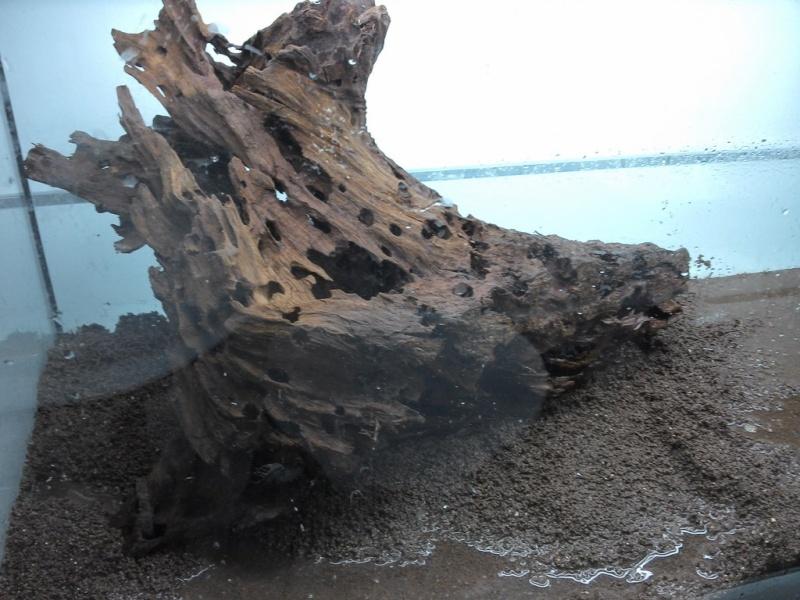 Aquatlantis 240l - En eau - vidange/remplissage 'auto' Img_2012