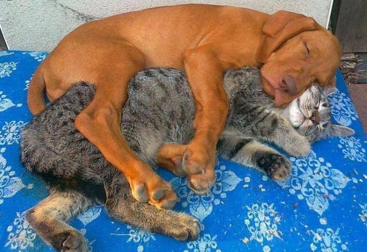 Images du jour sur les chats - Page 6 10520510