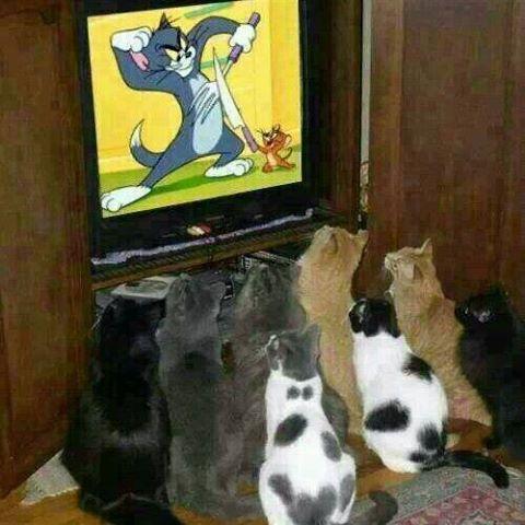 Images du jour sur les chats - Page 5 10891510