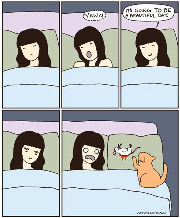 Images du jour sur les chats - Page 6 L10
