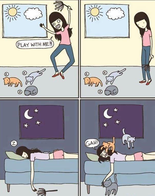 Images du jour sur les chats - Page 5 Q10