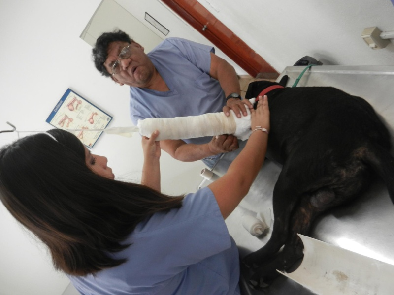Mon expérience d'ASV et de Soigneur Animalier au Mexique - Page 4 10273110