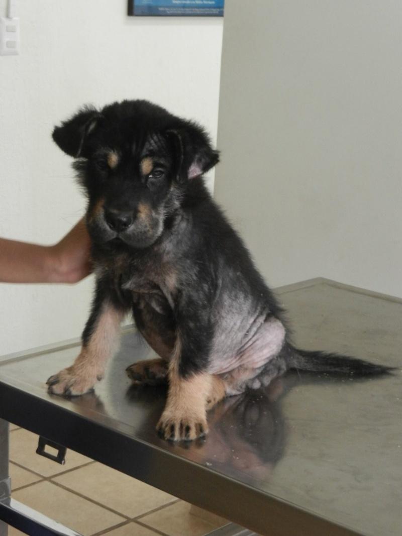 Mon expérience d'ASV et de Soigneur Animalier au Mexique - Page 4 10446210