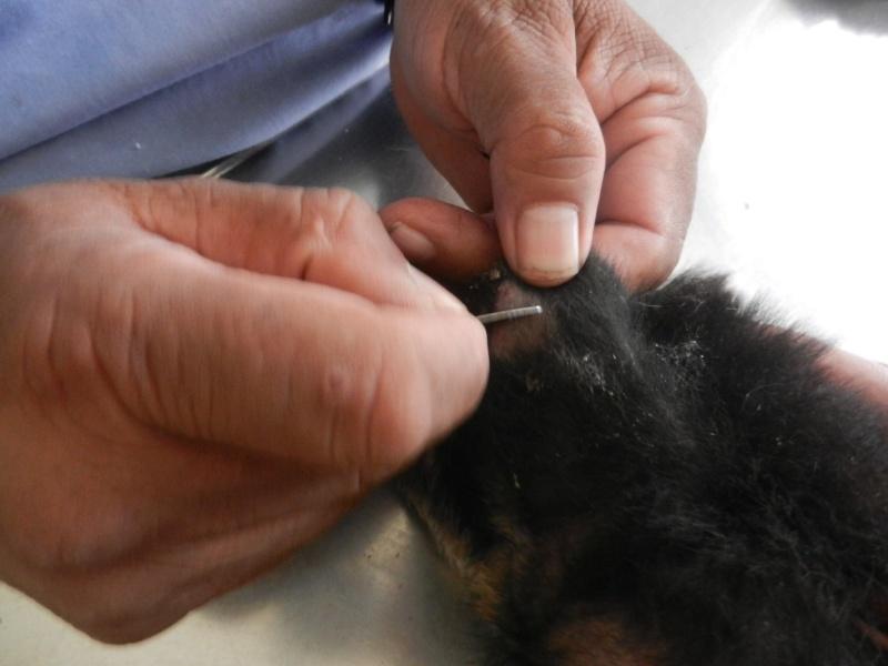 Mon expérience d'ASV et de Soigneur Animalier au Mexique - Page 4 10694310