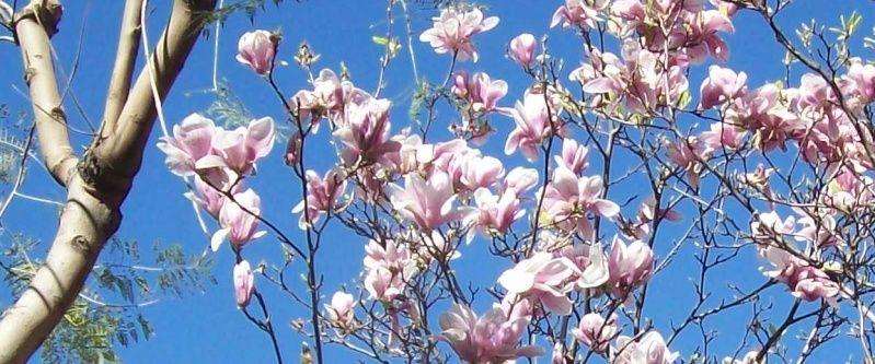 Fleurs du moment - Page 8 Sans_t12