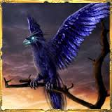 Oiseaux de nuit Tylych11