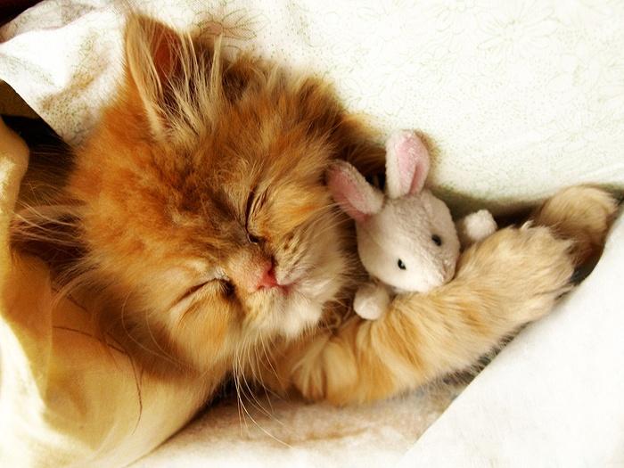 Bon Dimanche Cat_bm10