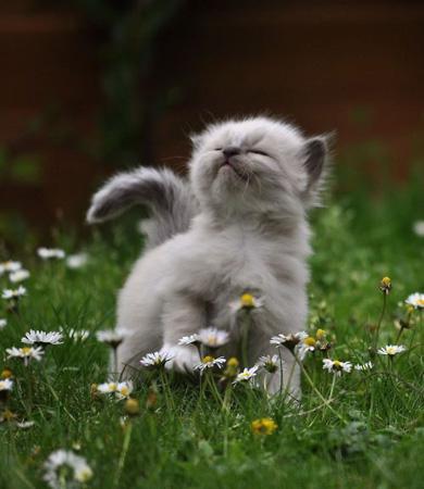 Bon Vendredi Kitten10