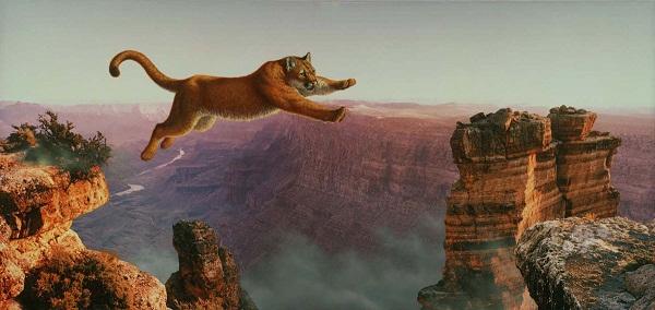 Bon Jeudi Leap-o10