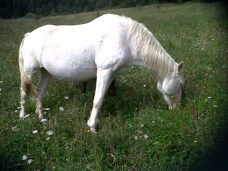 VENUS - ONC poney née en 1987 - adoptée en octobre 2012 par souris73 Img00210