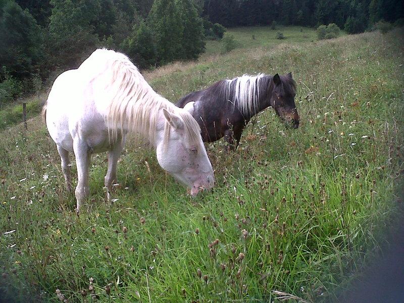 VENUS - ONC poney née en 1987 - adoptée en octobre 2012 par souris73 Img00211