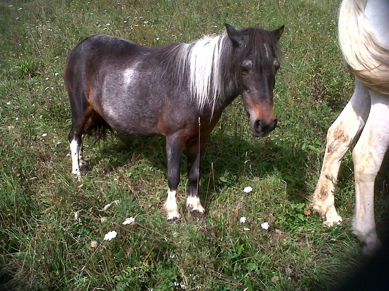 PRUNELLE - ONC poney née en 1986  - adoptée en octobre 2012 par Prosper Img00214