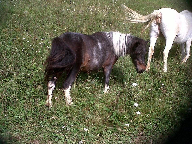PRUNELLE - ONC poney née en 1986  - adoptée en octobre 2012 par Prosper Img00215