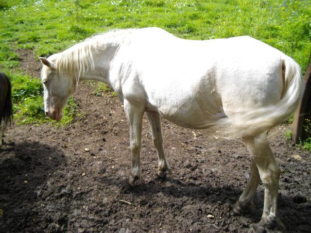 VENUS - ONC poney née en 1987 - adoptée en octobre 2012 par souris73 Imgp0710