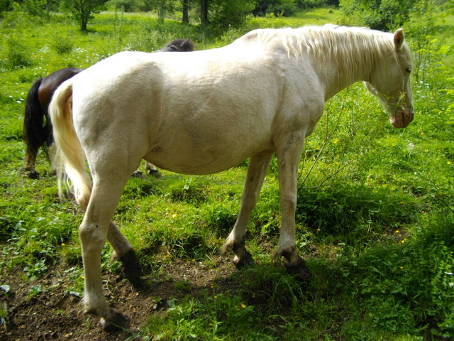 VENUS - ONC poney née en 1987 - adoptée en octobre 2012 par souris73 Imgp0711