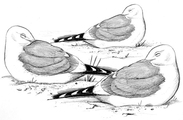 Bon Lundi Oiseau10