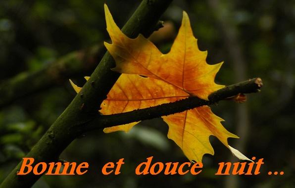 Bon Mardi Pour_b24