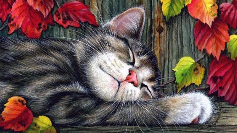 Bon Dimanche Sleep_19