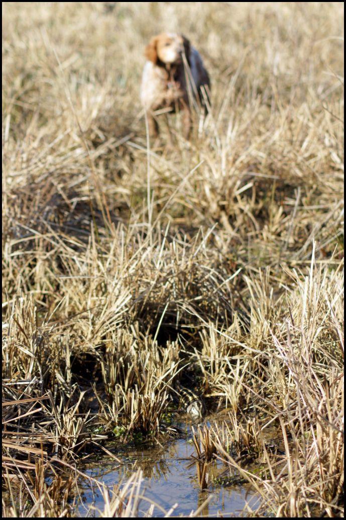 Les oiselles du marais - Page 6 D12