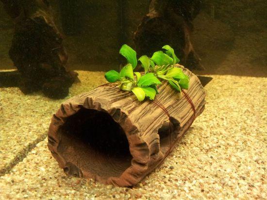 "Mon aquarium Juwel "" Lido 120 "" - Page 2 Photo_10"
