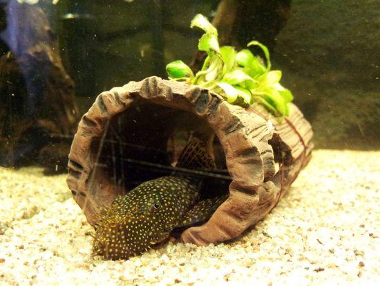 "Mon aquarium Juwel "" Lido 120 "" - Page 2 Photo_12"