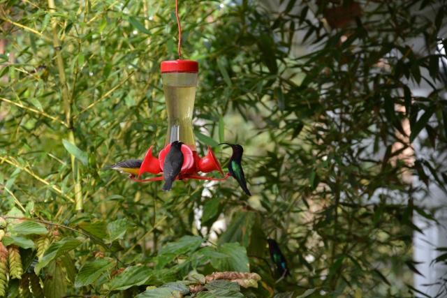 (972) Le jardin botanique de Balata - Martinique 21janv22