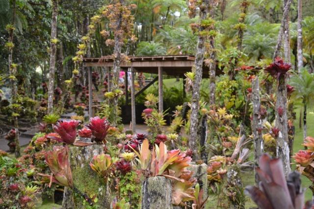 (972) Le jardin botanique de Balata - Martinique - Page 2 21janv28