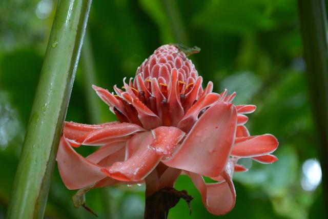 (972) Le jardin botanique de Balata - Martinique - Page 2 21janv33