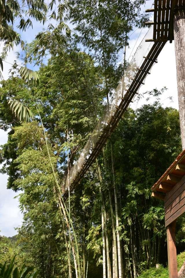 (972) Le jardin botanique de Balata - Martinique - Page 2 21janv35