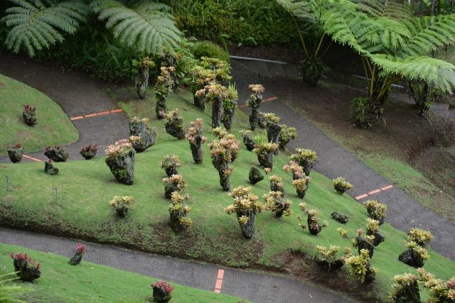 (972) Le jardin botanique de Balata - Martinique - Page 2 21janv36