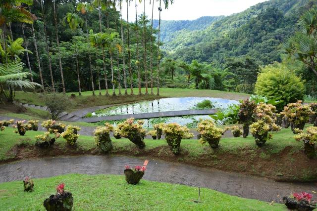 (972) Le jardin botanique de Balata - Martinique - Page 2 21janv37