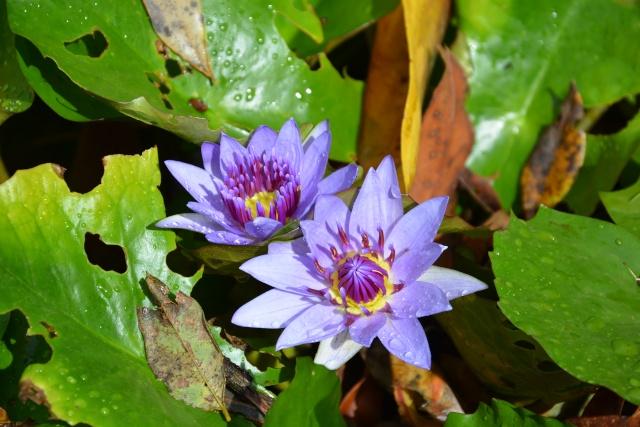 (972) Le jardin botanique de Balata - Martinique - Page 3 21janv46