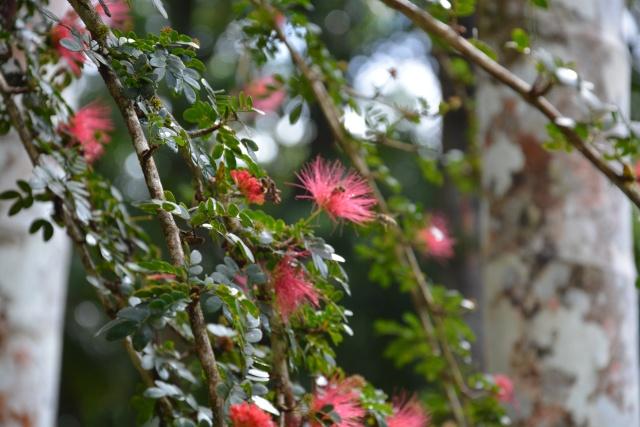 (972) Le jardin botanique de Balata - Martinique - Page 3 21janv47