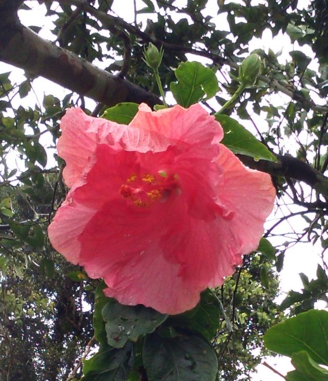 (972) Le jardin botanique de Balata - Martinique - Page 3 Dsc_0012