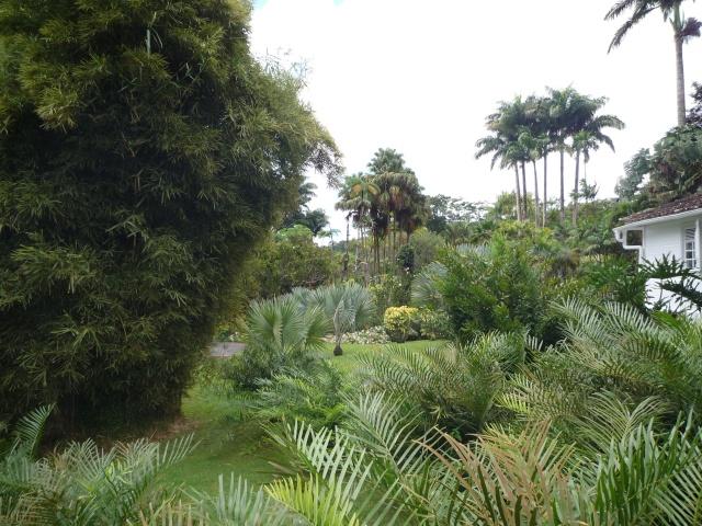 (972) Le jardin botanique de Balata - Martinique P1100736