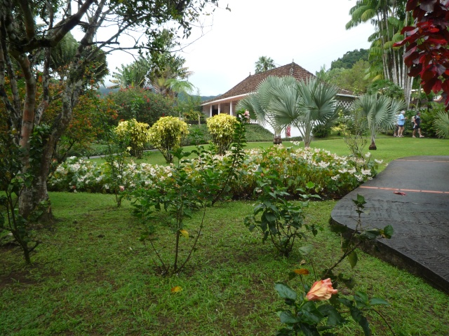 (972) Le jardin botanique de Balata - Martinique P1100737